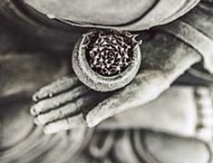Dhara-Wellness-Garden-home-psi-holistica