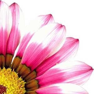 Dhara-Wellness-Garden-bach
