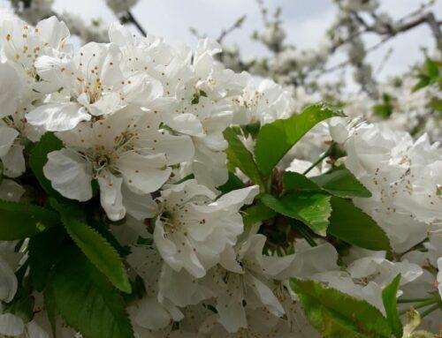 El poder curativo de las flores de Bach